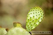 Fond d'écran Cactus