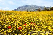Fond d'écran paysage de fleurs