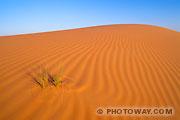 Fond d'écran dunes du désert