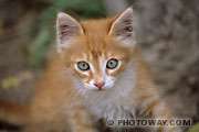 chaton - chat