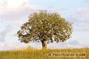 Fond d'écran arbre