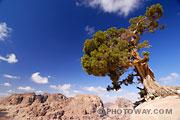 Photo d'un arbre dans un paysage de montagnes arides de Jordanie