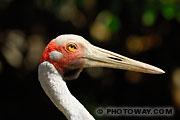Photothèque d'oiseaux : photo d'un grand échassier