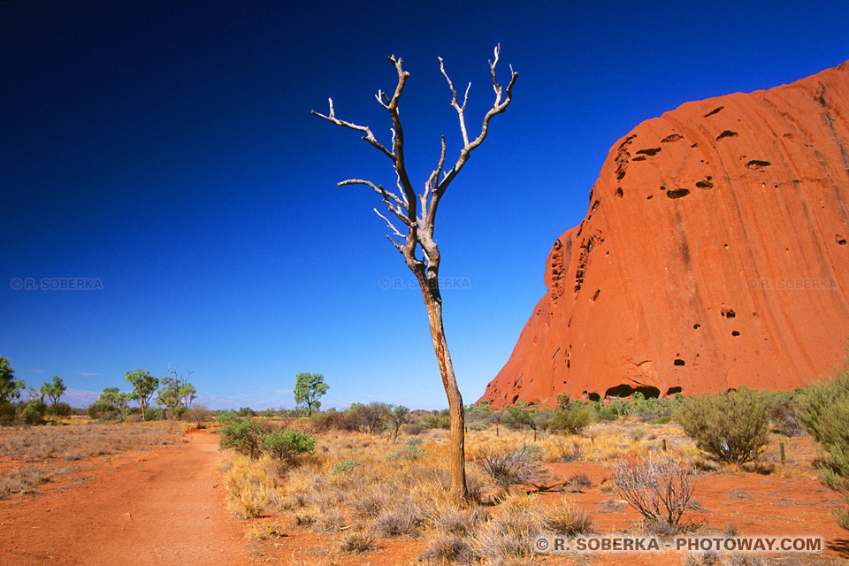 randonnée dans le desert en Australie