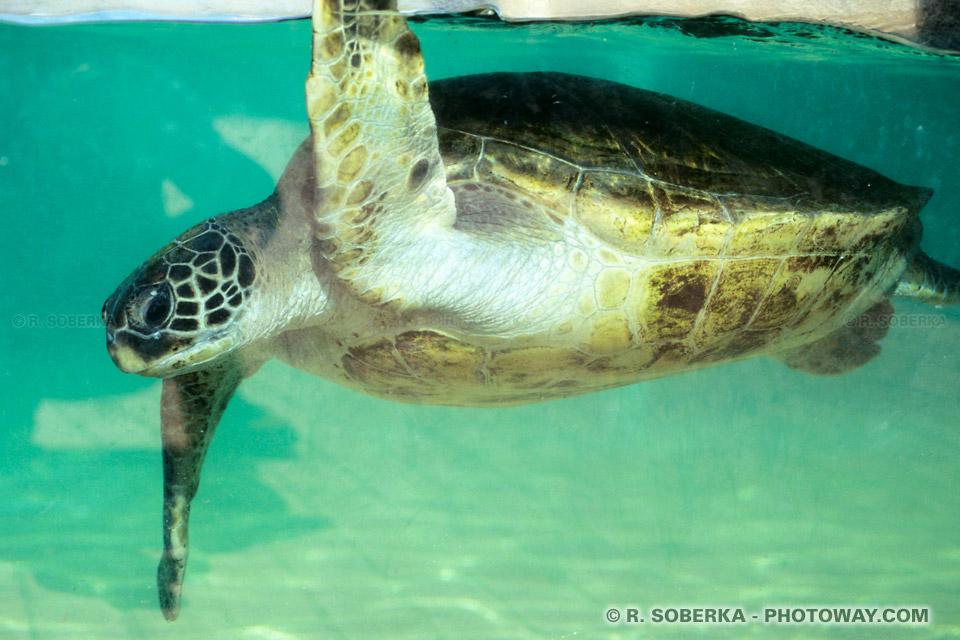 ONU : Les tortues de mer