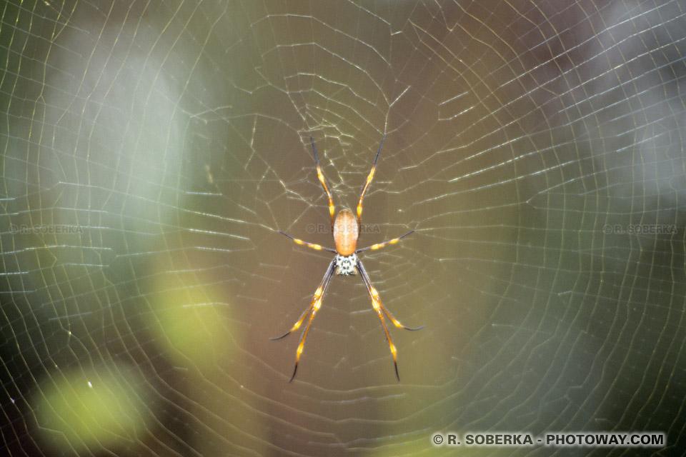 Photos d 39 araign es photo d 39 une araign e sur sa toile en australie - Toile d araignee en papier ...