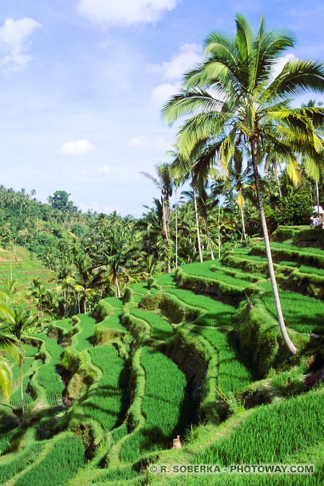 Photo de rizières en térrasses à Bali