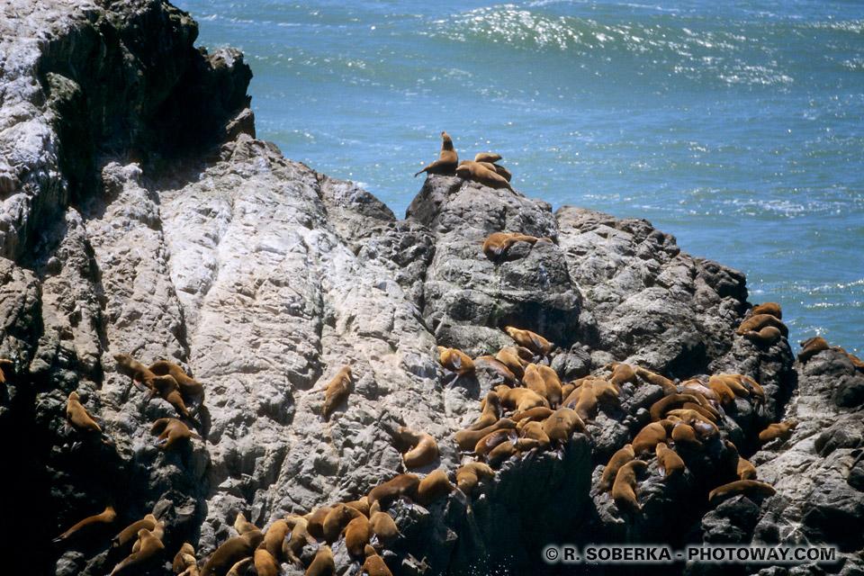 Photos du Seal Rocks : Photo du rocher aux Phoques de San Francisco