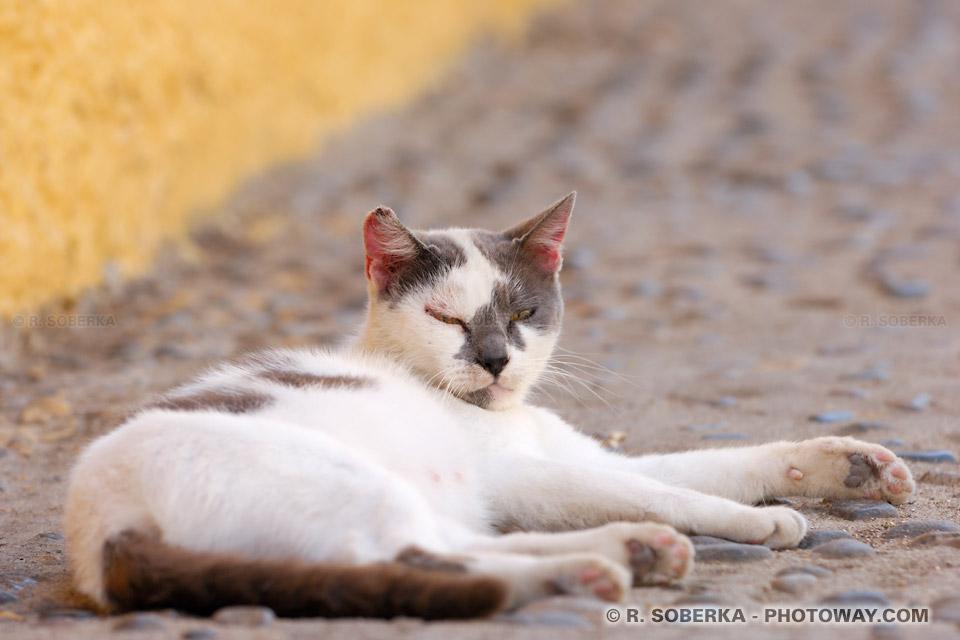 chat de gouttière image de Valparaíso au Chili