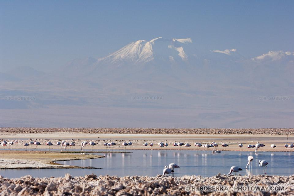 Lagune Chaxa photo de la laguna Chaxa dans le Salar d'Atacamaau Chili