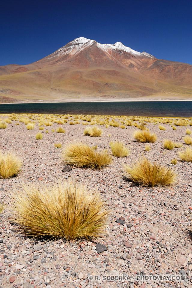 Végétation de l'Altiplano photo de la Cordillère des Andes au Chili