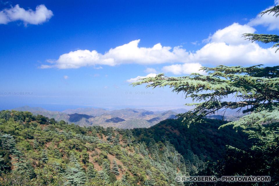 Images du mont Olympe photo cèdres argentés montages Troodhos Chypre