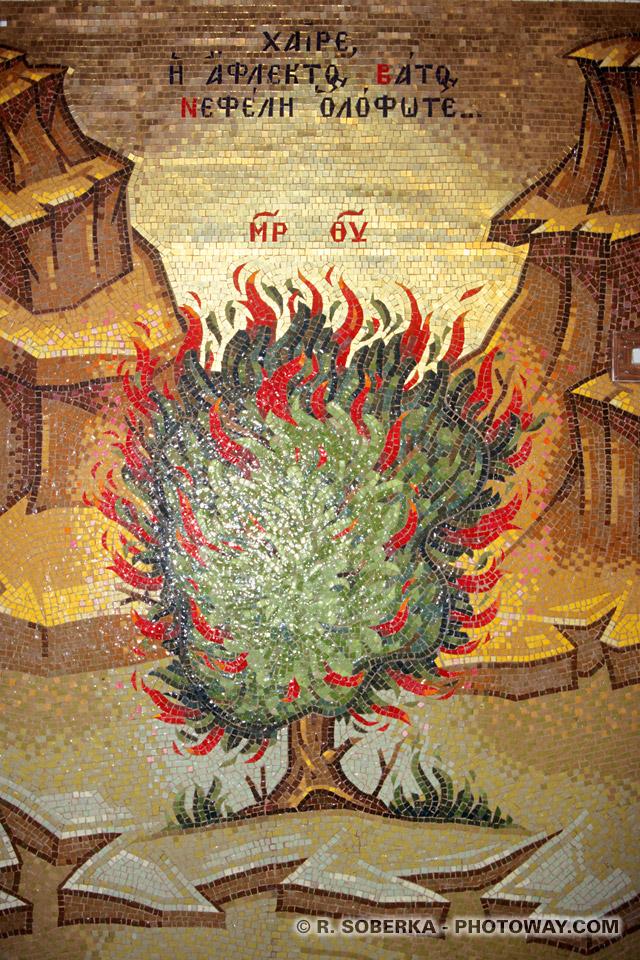 Image Photo du buisson ardent photos du buisson ardent icones à Chypre