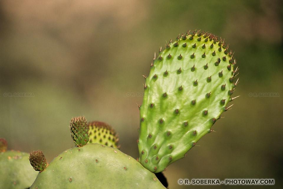 Cactus Fond d'écran wallpaper