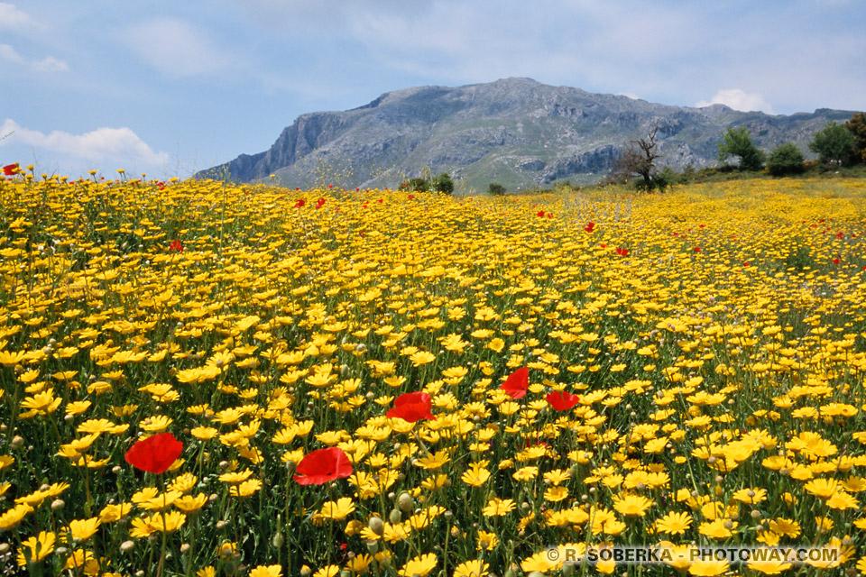 Présentation de la plaine aux Papillons CRT00_108-fleurs-marguerites