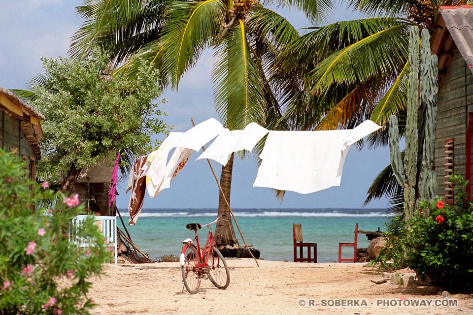 Photos de palmiers aux bord de la mer des caraïbes, voyage à Cuba sur Photoway.com