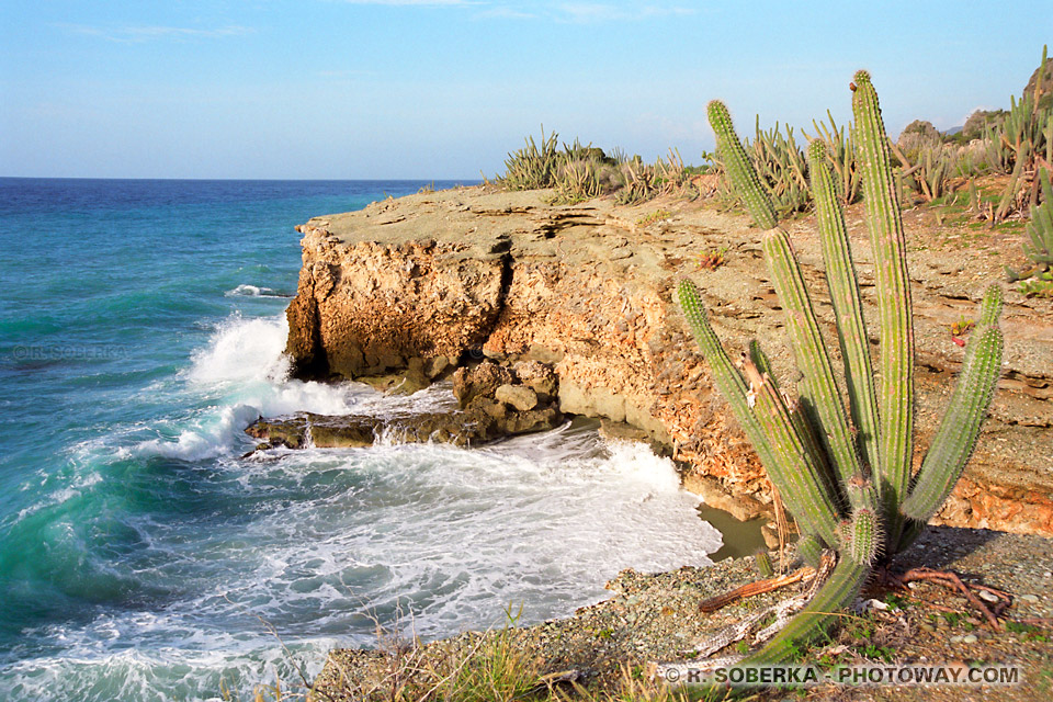 image Photos de cactus photo mer des Caraîbes photo des antilles