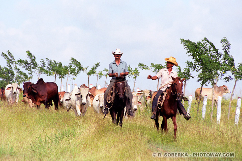 Image et photos de cow-boys cubains, photo cavaliers et chevaux à Cuba sur photoway.com