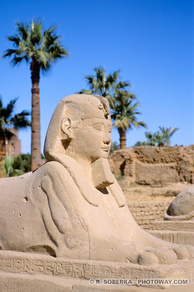 Images et Photos de Sphinx photo du Sphinx du pharaon Nectanébo Louxor égypte