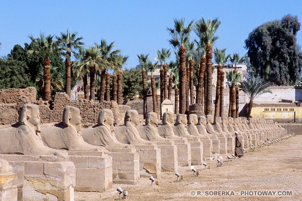 Photos de l'allée de Sphinx photo du temple de Louxor voyage en Egypte