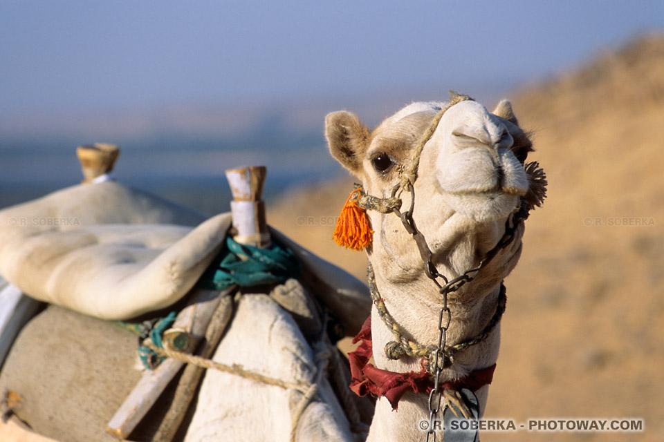 Photos de moyens de locomotion dans le desert reportage photo en Egypte