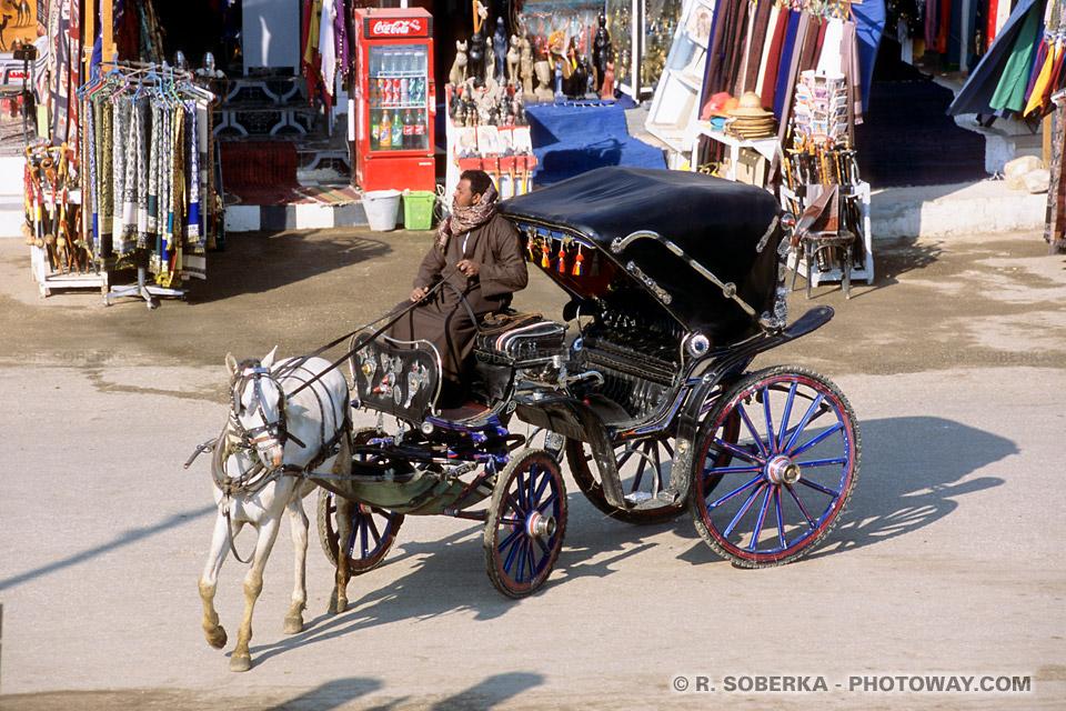 Image de transports en Egypte photos de calèches photo Louxor