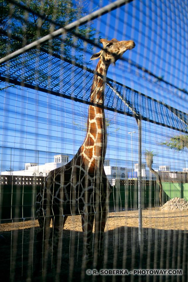 Image Photos du zoo photo visite du zoo de Dubaï Emirats Arabes Unis