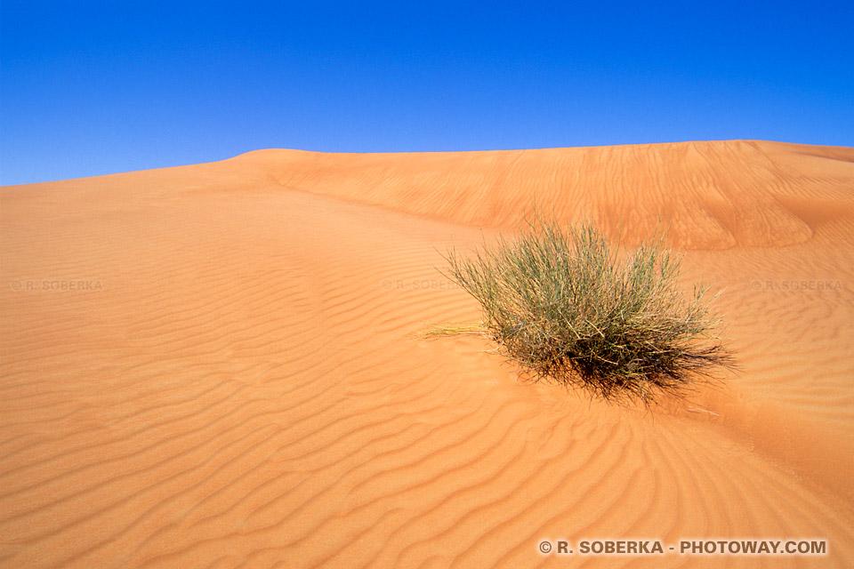 Image Survie dans le désert Photo de végétation du désert Emirats Arabes