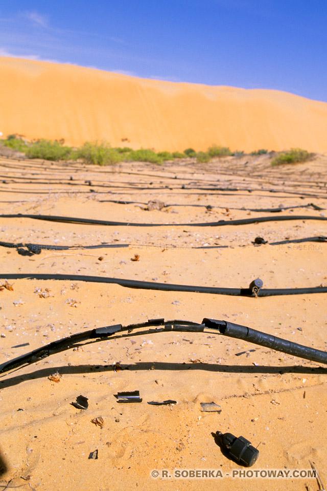 Culture intensive et irrigation dans le désert climat et température oasis