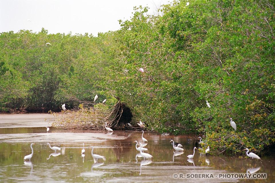 Photos des Everglades en Floride