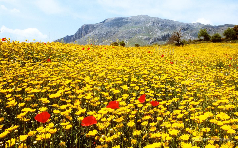 Fond d 39 cran paysage de fleurs en cr te fonds d 39 cran for Fond d ecran pour pc 17 pouces