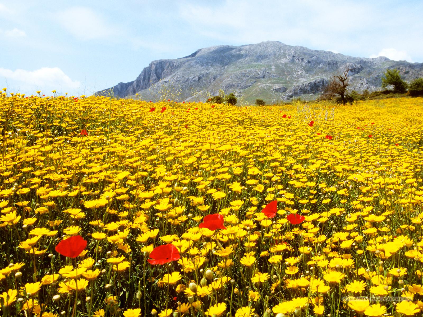 Fond d 39 cran paysage de fleurs en cr te fonds d 39 cran for Fond ecran 17 pouces