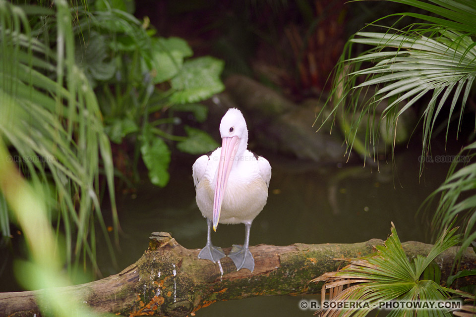 Photos oiseaux photo jardin botanique visite de Hong-Kong images