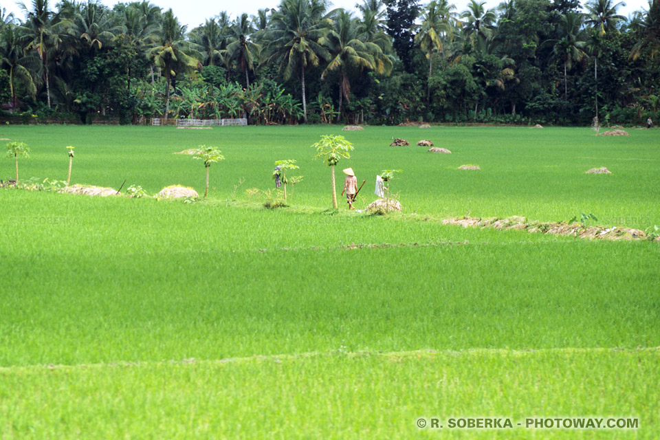 photos de jeux de lumière dans les rizières indonésiennes