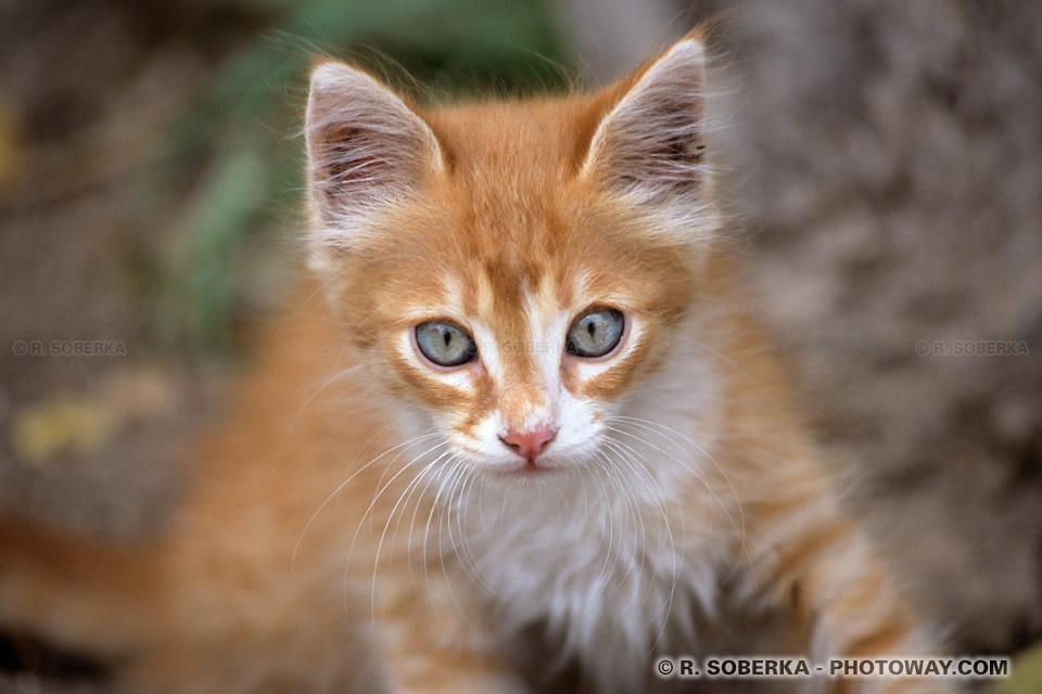 Chats photos d'un petit chat à Malte un chaton en photo