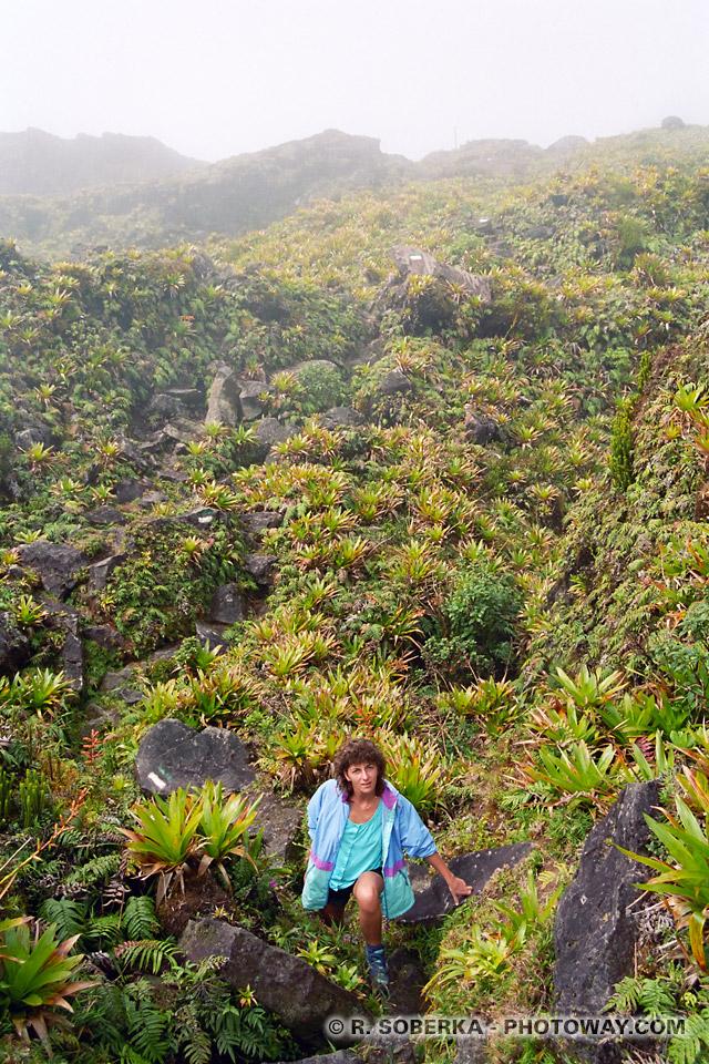 brouillard dans la Montagne Pelée Martinique