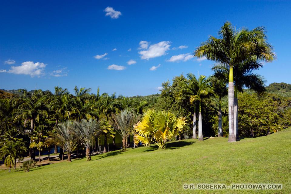 Habitation Clément visite parc Botanique