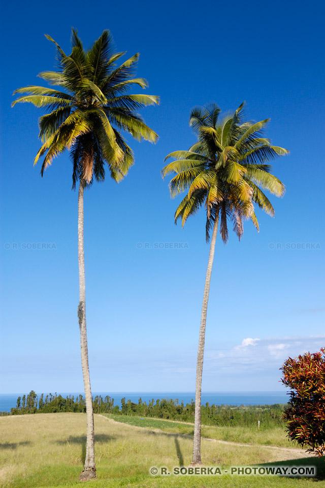 Palmiers Plantation Leyritz