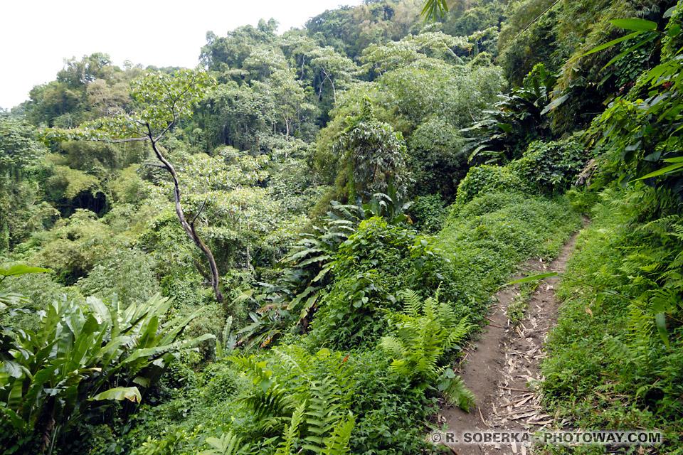 Randonée Grand Rivière à l'Anse couleuvre en Martinique
