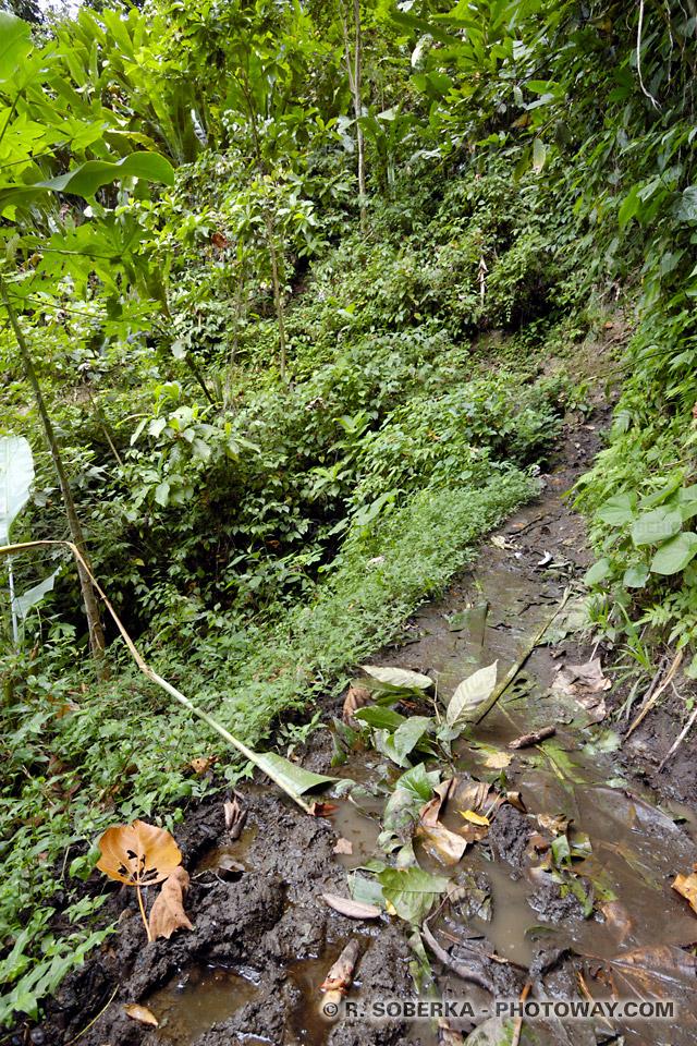 Photos de sentiers dangereux Martinique
