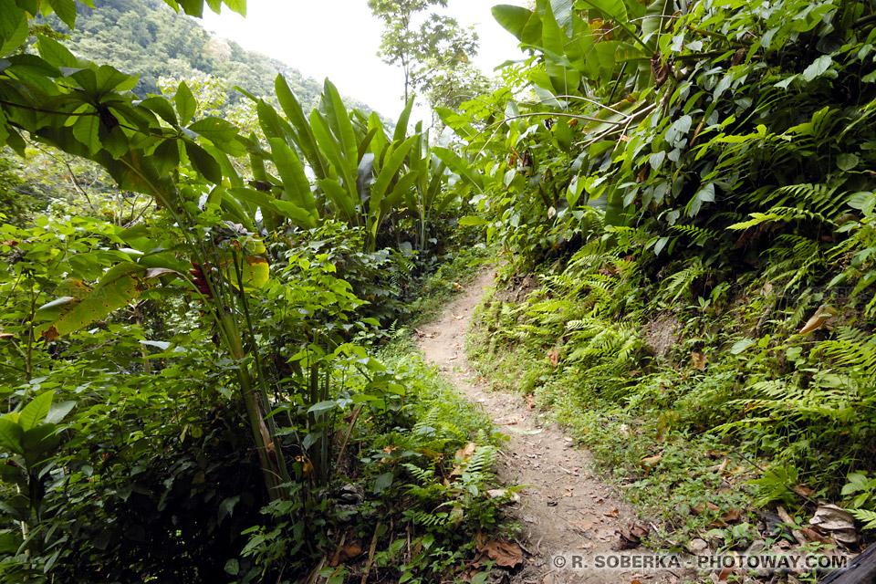 Randonnée Grand Rivière à l'Anse Couleuvre en Martinique