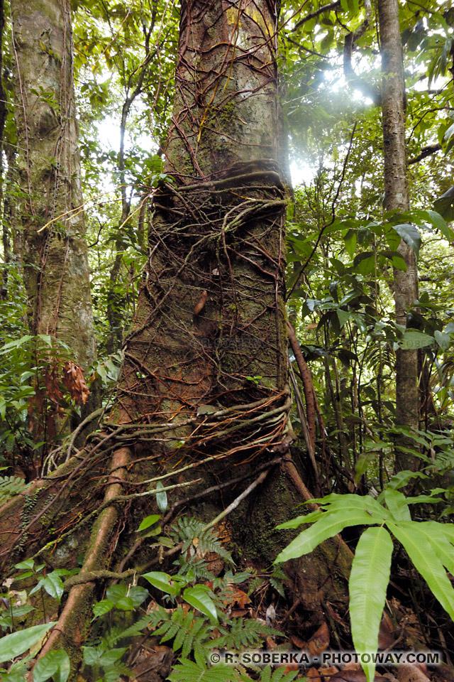 Photo jungle tropicale en Martinique