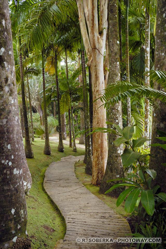 plantes exotiques Martinique