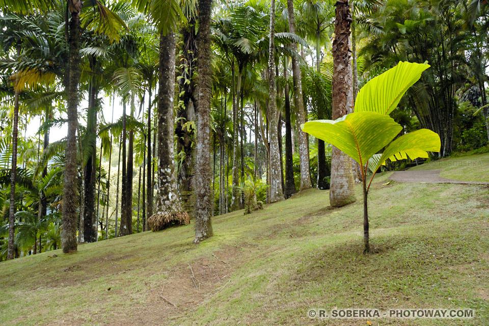 palmeraie jardin de Balata