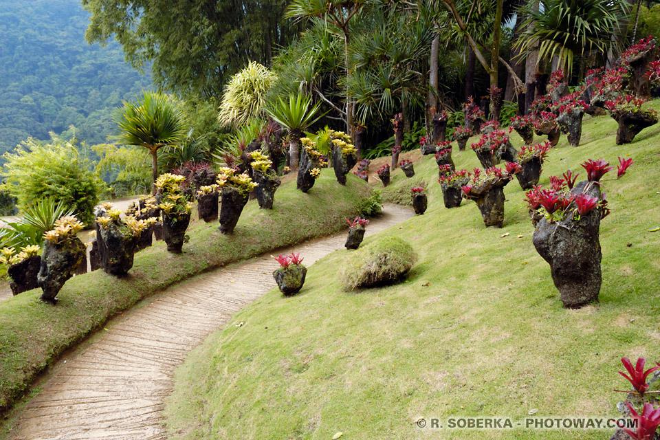 Jardin de Balata guide touristique Martinique
