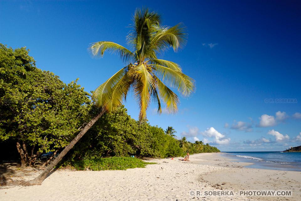 Anse à Prunes photos plages sauvages Martinique