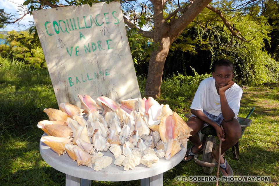 coquillages lambis