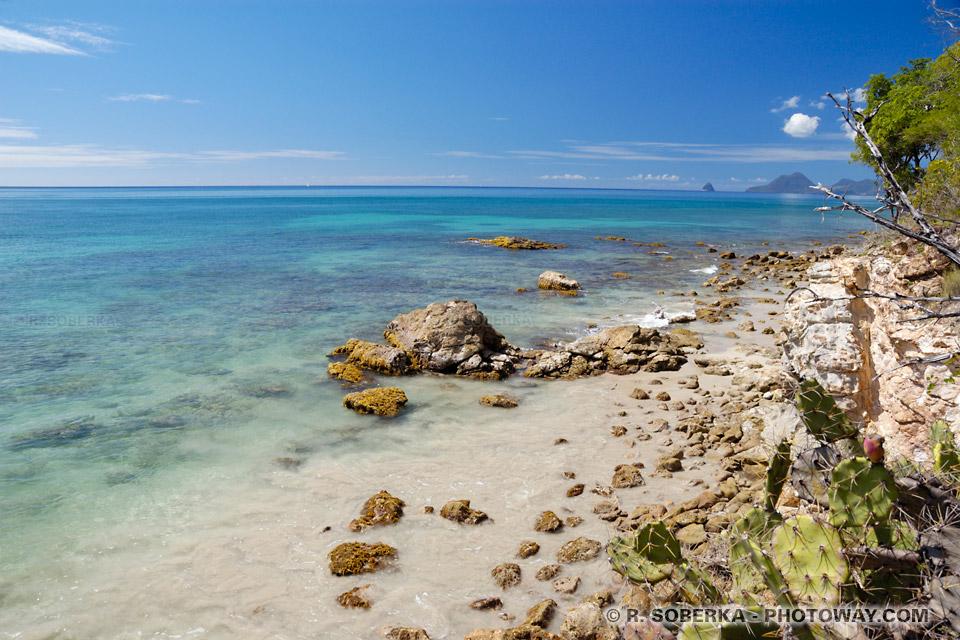 côte sauvage en Martinique