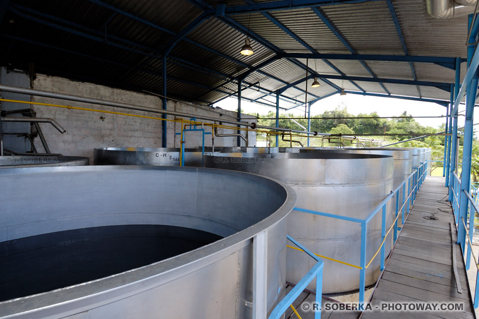 cuves de fermentation rhum