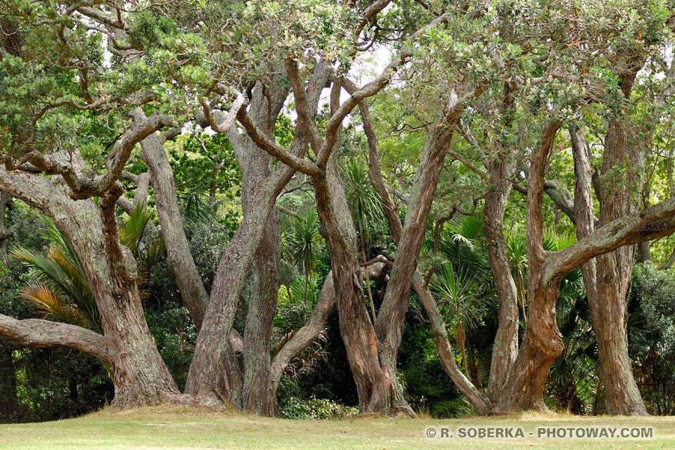 Présentation des Arbres Magiques. NZEL06_110-arbres-auckland
